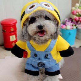 Minion Dog Hoodie